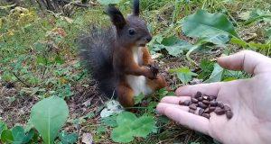 Et ekorn går i vranglås mens den spiser nøtter – i tråd med 2020 så langt.