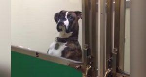Mannen må hente hunden sin hos veterinæren – det hun gjør får hele verden til å le.