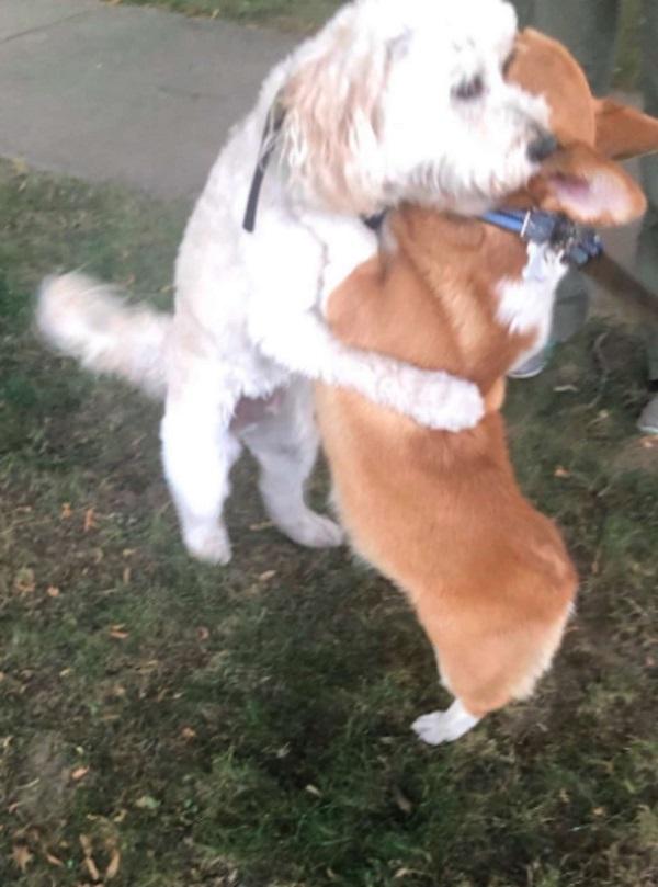 Hunder klemmer hverandre på gaten