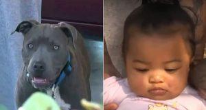Hund biter baby og sleper henne mot døren – da innser mor at det fryktelige nesten skjer.
