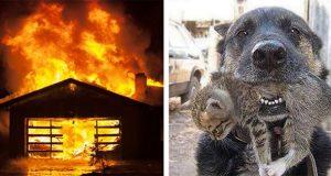 Heltemodig hund styrtet inn i overtent hus. Grunnen? Denne historien må du lese.