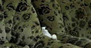 Venner som trodde familien tullet da de sa at katten deres «eier» sofaen – lærer noe annet.
