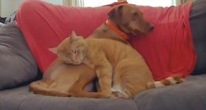 Skjult kamera fanger opp katt som trøster engstelig hund når familien er borte.