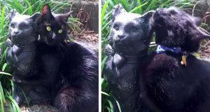 Katt forelsker seg i en statue – som er prikk lik ham selv!