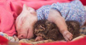 Minigris og kattunge reddes fra døden. Det skulle bli begynnelsen på et vakkert vennskap.