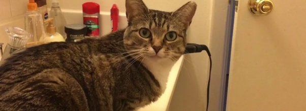 En morsom, stripete katt responderer vokalt når eieren hennes spør om hun er sulten
