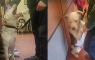 Hunden klamrer seg til eieren på Dyrebeskyttelsen når han innser at han blir overgitt