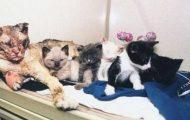 Katten Scarlett gikk gjennom flammene 5 ganger for å redde sine barn.