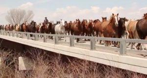 Hundrevis på hundrevis av hester traver over motorveien i fantastiske opptak fra Sombrero Drive