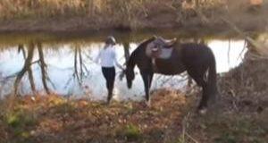 Hesten får oppleve vann for første gang – bare se på den fantastiske reaksjonen.