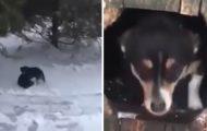 En katt kjemper for livet i snøstormen – da tar hunden en livsavgjørende beslutning.