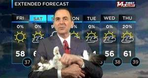 Værmannen blir nødt til å jobbe hjemmefra – går viralt etter at katten hans blir med på sendingen.