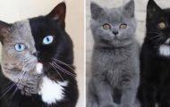 Katten Narnia med to ansikter tok verden med storm – er nå blitt mor til to unger!