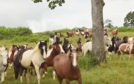 200 hester ble reddet – nyter livet på en vakker oase.