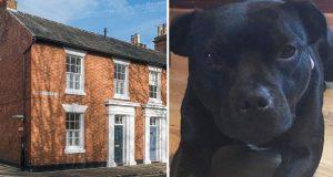 Voldtektsmannen trodde ikke at en liten hund ville forstyrre ham – der tok han helt feil!