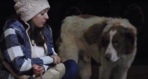 Kvinne forelsker seg i løshund som bor på en bensinstasjon og gjør alt for å redde ham.