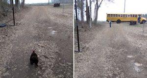 Hanen løper så fort han kan for å hilse på den lille jenta som kommer hjem fra skolen.