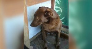 Deprimert hund sitter alene i hundehjemmet i 2 år. Så kjenner hun plutselig en kjent duft.