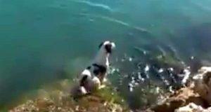 Hund kan ikke styre seg når han ser delfiner i havet – hopper ut for å svømme med dem.