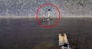 På tur med hunden ser han en bevegelse i sidesynet – legger på svøm når han ser det.