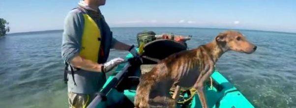 Mann redder sultende hund strandet på en øde øy – og bringer han hjem.