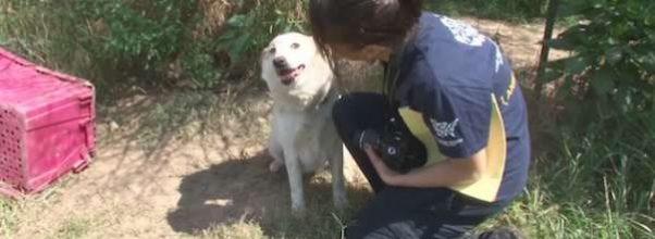 Fastlenket hund måtte spise steiner for å overleve. Nå stjeler hun hjertet til sin redningskvinne.